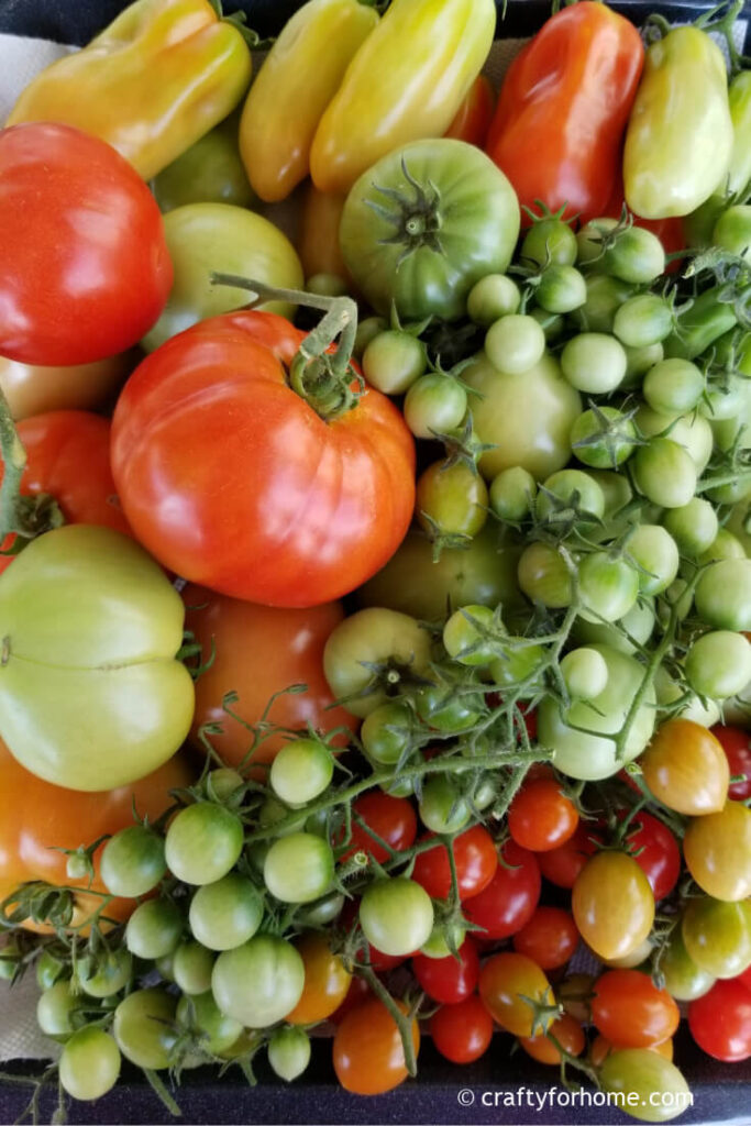 Ripen green tomatoes