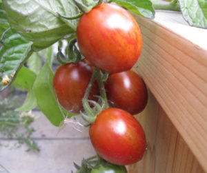 7 Things To Put On Your Tomato Planting Hole | Follow these gardening tips on how to get the best tomatoes in the block by adding these 7 things before you put tomato plants into the planting hole.