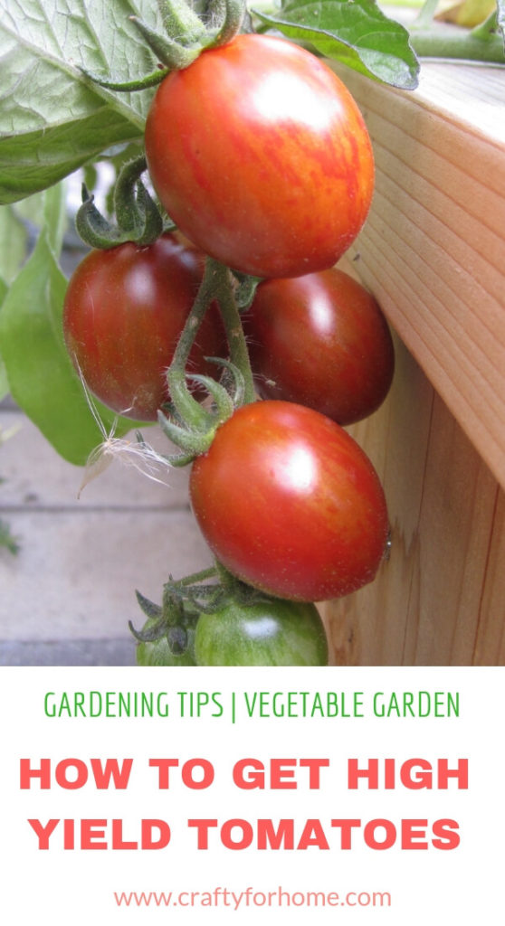 7 Things To Put On Your Tomato Planting Hole | Follow these gardening tips on how to get the best tomatoes in the block by adding these 7 things before you put tomato plants into the planting hole. #growingtomatoes #tomatofertilizer #homemadefertilizerfortomatoes #organicfertilizerfortomatoes for details on www.craftyforhome.com