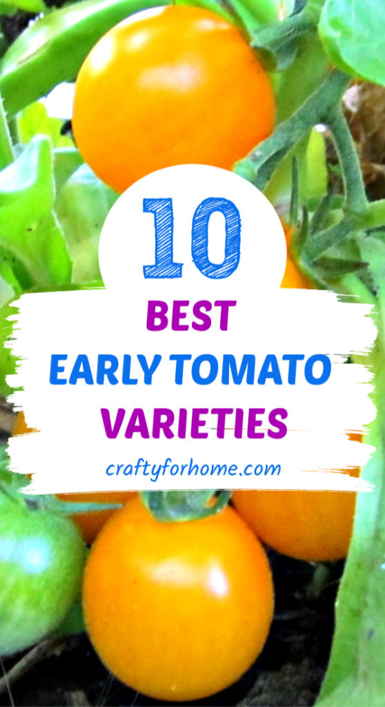 Best Early Tomato Variety