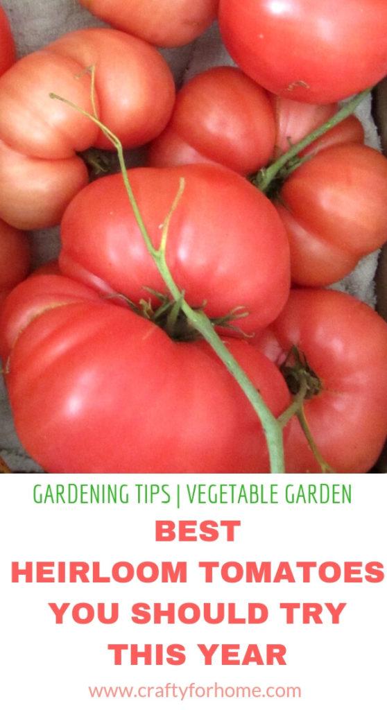 Best Heirloom Tomato Varieties Crafty For Home