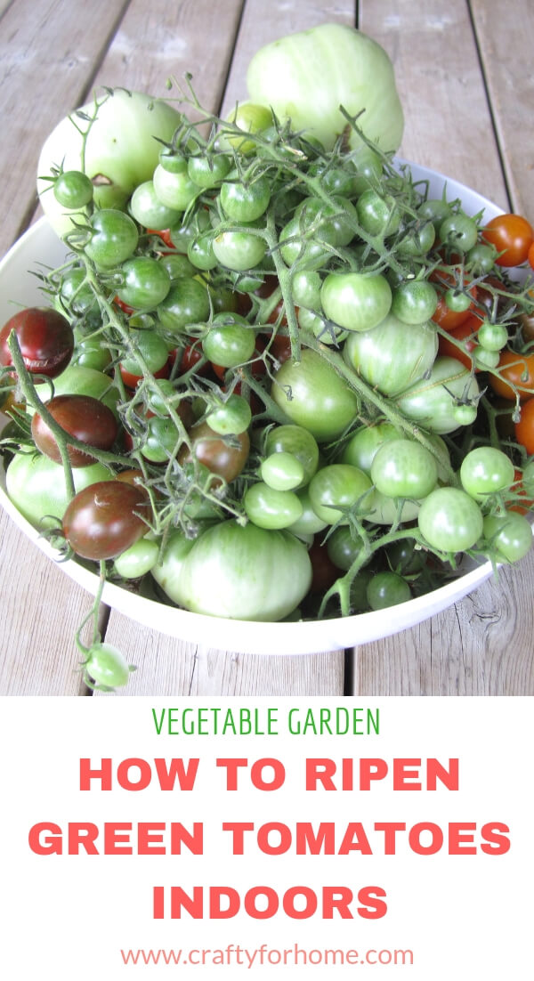 how to ripen green tomatoes indoors crafty for home. Black Bedroom Furniture Sets. Home Design Ideas