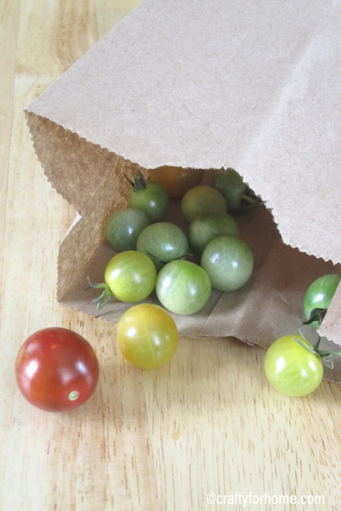 How To Ripen Green Tomatoes Indoors | Store your green tomatoes indoor at the end of growing season. Here are four tips on how to do it so you can enjoy these tomatoes later on in the fall or winter. #vegetablegarden #growingtomatoes #greentomatoes find out these easy tips on www.craftyforhome.com