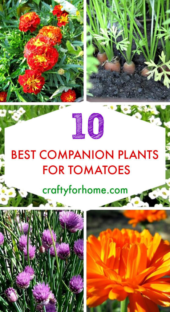 Best Companion Plants For Tomatoes