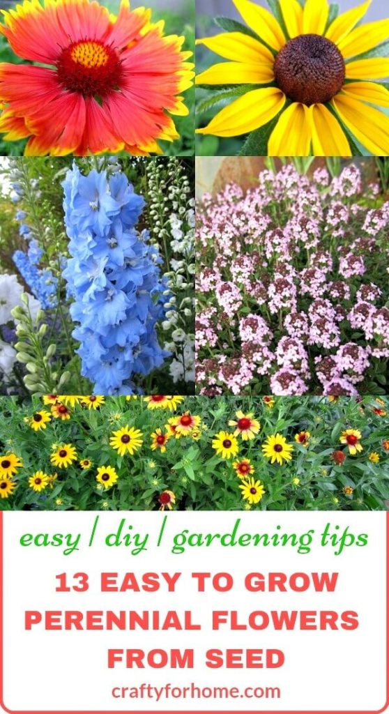 13 Easy To Grow Perennial Flower From Seed Crafty For Home