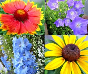 13 Easy To Grow Perennial Flowers From Seed | Plant these low care perennial flowers that bloom all summer in the full sun or partial shade from seed to save you on the budget for gardening.