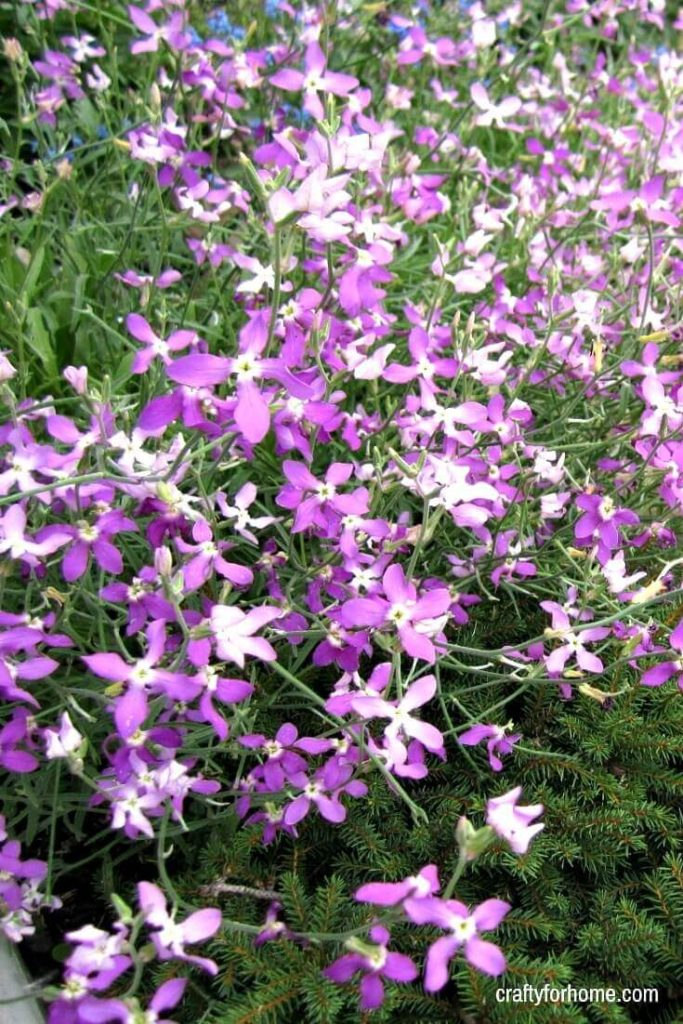 15 Easy To Grow Annual Flowers From Seed   If you are starting a garden then try these easy to grow annual flowers from seeds that will be blooming all summer long with minimal care in full sun or partial shade. #flowerforfullsun #flowerforshade #annualflowersfromseeds #annualflowersforbeds #landscapingwithannualflowers #annualflowersforborder #easyannualflowers #lowmaintenaceflowers #annualflowersforpots for details on https://craftyforhome.com