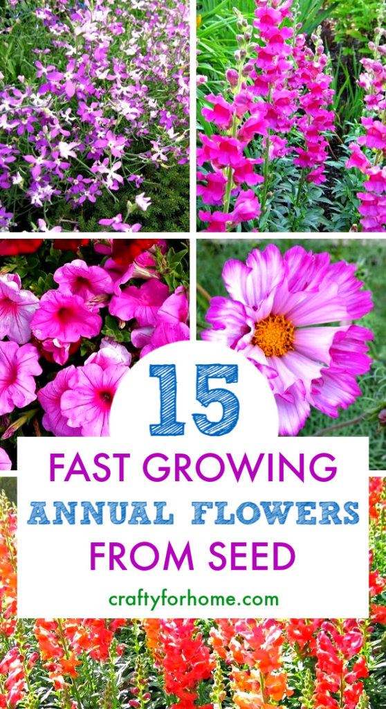 15 Easy To Grow Annual Flowers From Seeds