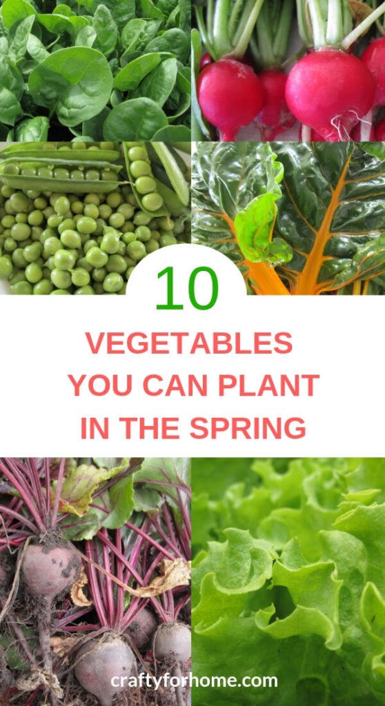 10 vegetable you can grow in the early spring