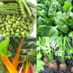 10 vegetable you can grow in the spring