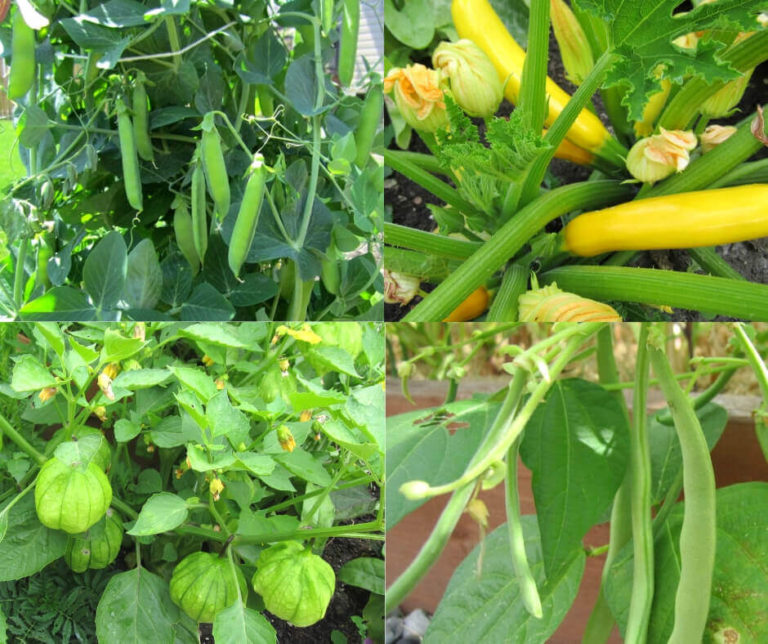 20 Easy To Grow Vegetables From Seed