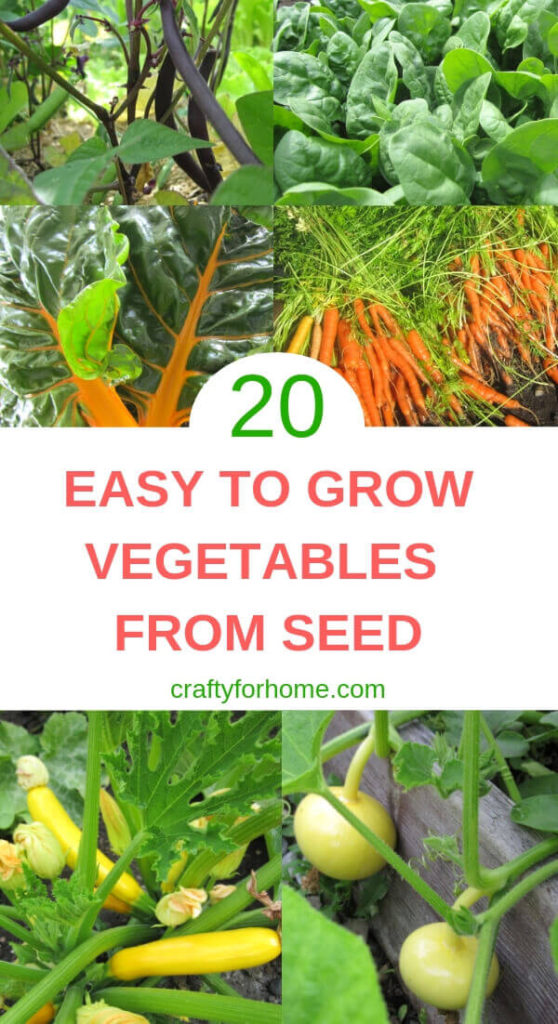20 Easy To Grow Vegetables From Seeds