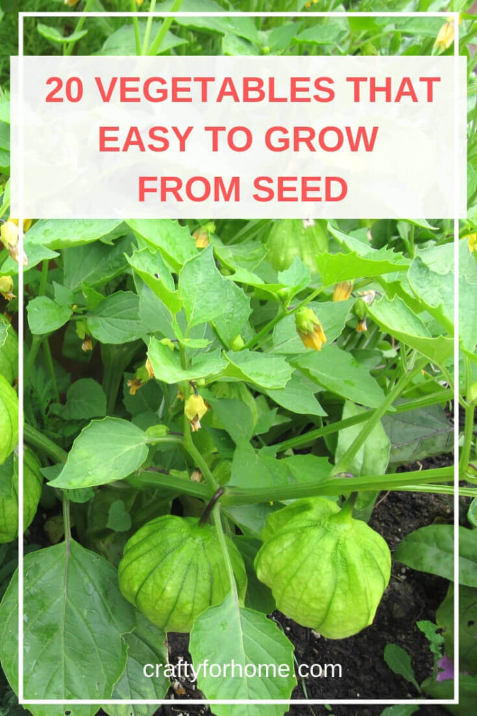 Lists of 20 Easy To Grow Vegetables From Seed