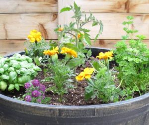 10 Best Tips To Grow Tomatoes In A Container