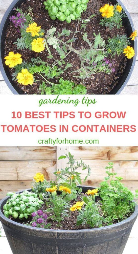 10 Best Tips To Grow Tomatoes In Containers