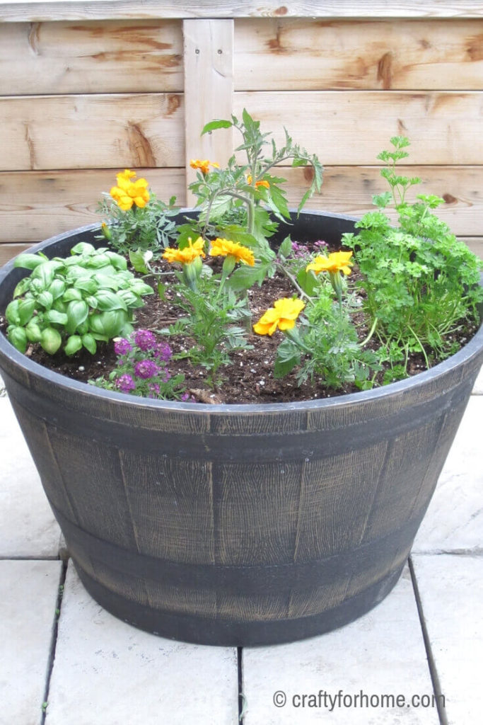 Growing Tomatoes And Herbs In A Container