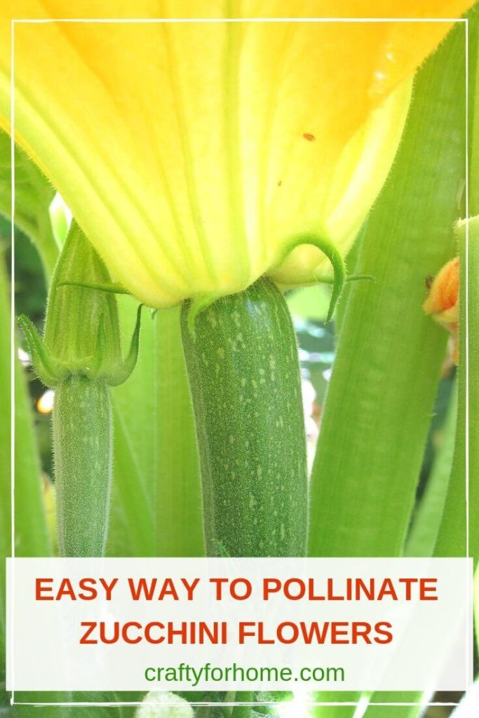 How To Hand-Pollinate Zucchini Flower