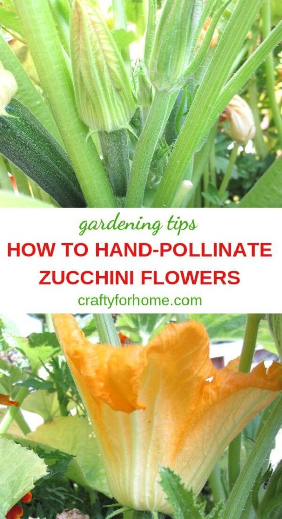 How To Hand-Pollinate Zucchini Plants