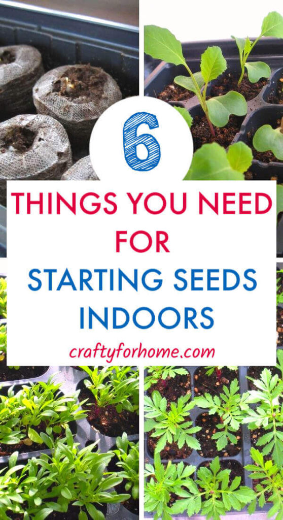 6 Things You Need For Seed Starting Indoors