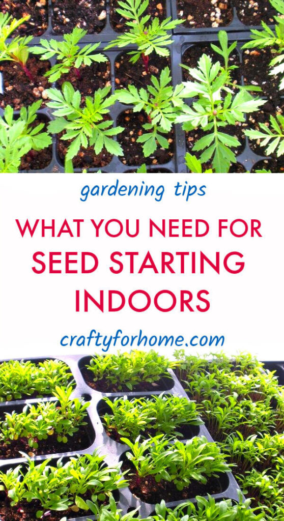 What You Need For Seed Starting Indoors