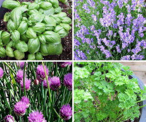 10 Easy Herbs To Grow From Seed