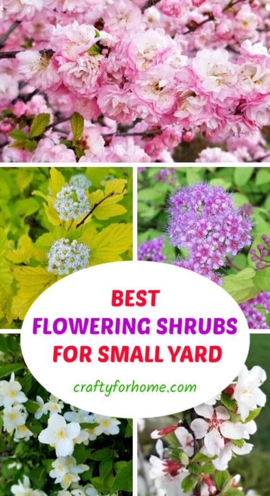 Best Flowering Shrubs For Small Yard