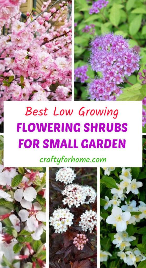 Best Low Growing Flowering Shrubs