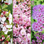 Short Flowering Shrubs For Small Yard
