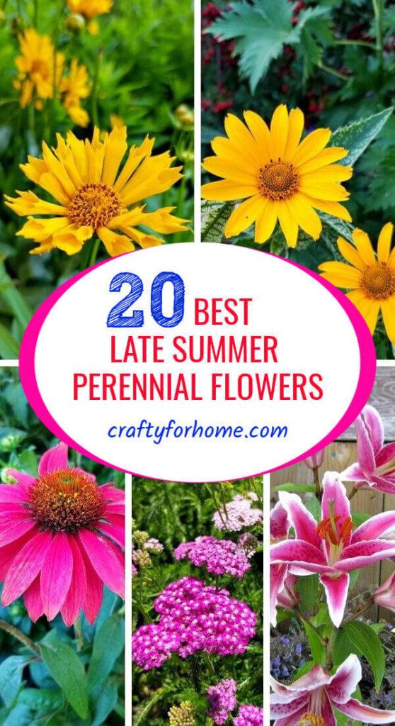 Best Late Summer Perennial Flowers