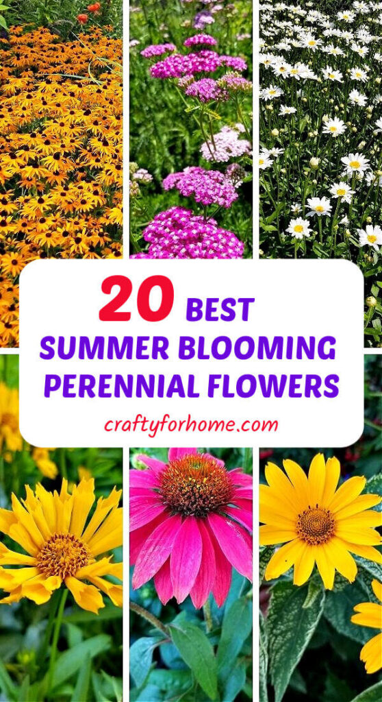 Best Summer Blooming Perennial Flowers
