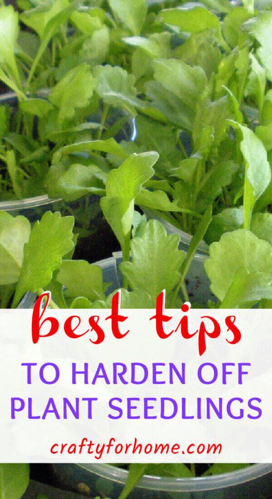 Best Tips To Harden Off Seedlings