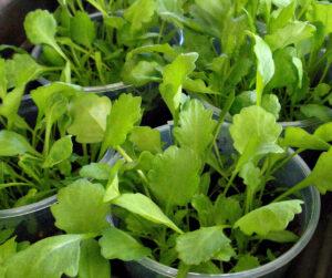 Tips To Harden Off Seedling