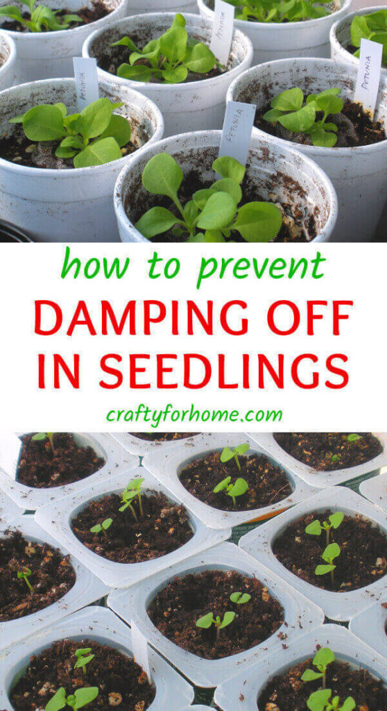 How To Prevent Damping Off