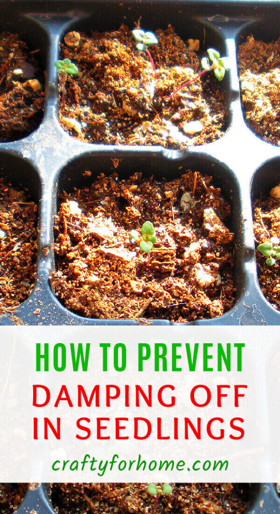 How To Prevent Damping Off Happening