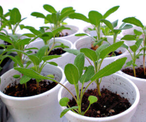 How To Prevent Damping Off In Seedlings