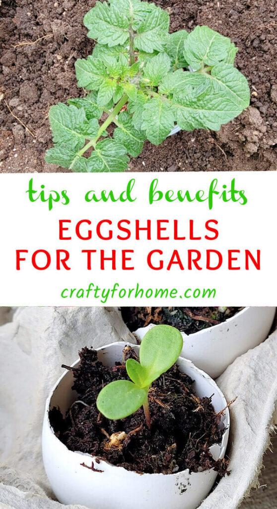 Benefit For Using Eggshells In The Garden