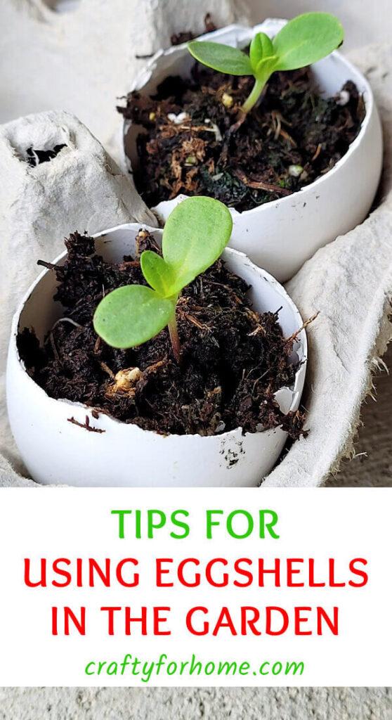 Tips For Using Eggshells For Garden