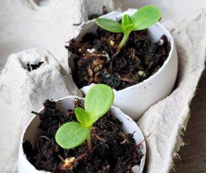 Tips For Using Eggshells In The Garden