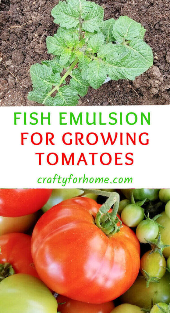 Fish Emulsion For Tomatoes