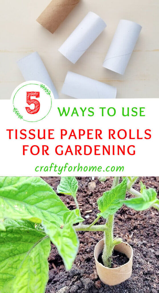 Tissue Paper Roll With Tomato Plant